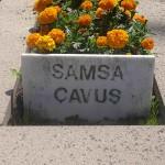 Samsa Çavuş